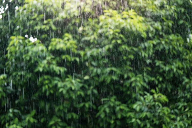 Full frame shot of wet trees in forest