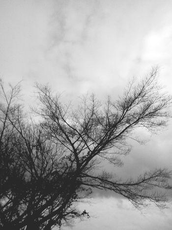 Cold Days Rain Don Filter