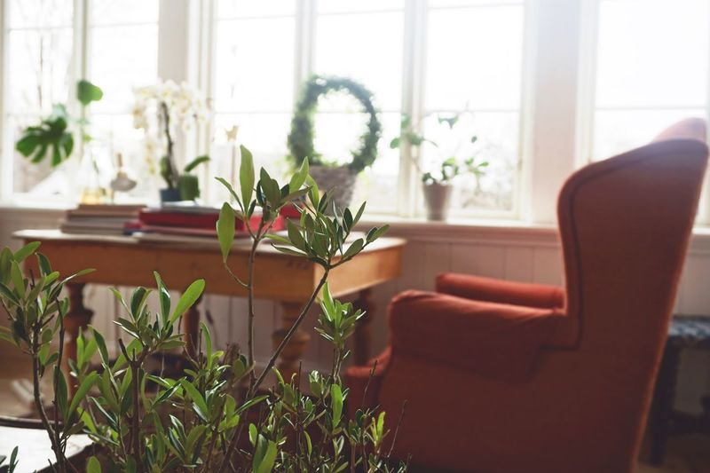 Interior views Still Life Light Window Interior Chair Plant Window Indoors  Potted Plant Chair Seat Nature Home Interior Flowering Plant No People Living Room Table Furniture Green Color Flower Pot Houseplant Domestic Room Day