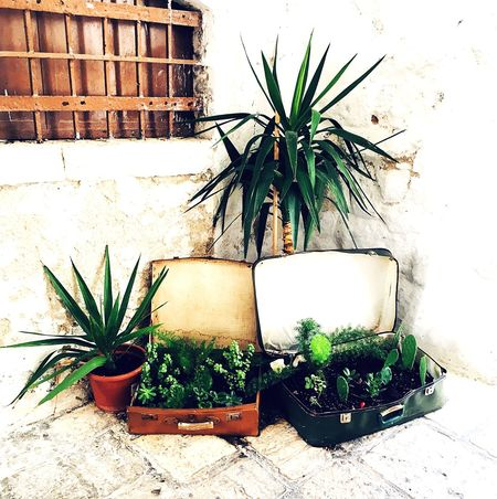 A random collection of plant life in a nook of a busy Italian alley Leaves Mini Palm Tree Plants Nook Italy Potted Plant Plant Growth Green Color No People Nature Outdoors Flower Leaf Freshness