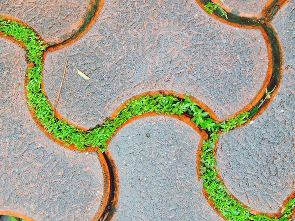Sidewalk Foothpath Battle Of The Cities Monsoonmagic Color Of Technology High Angle View Close-up Green Color Plant Green Outdoors Day Footpath Concrete Symbol