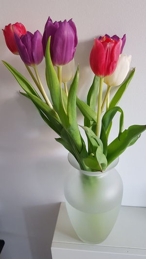 Close-up of rose flower vase on table