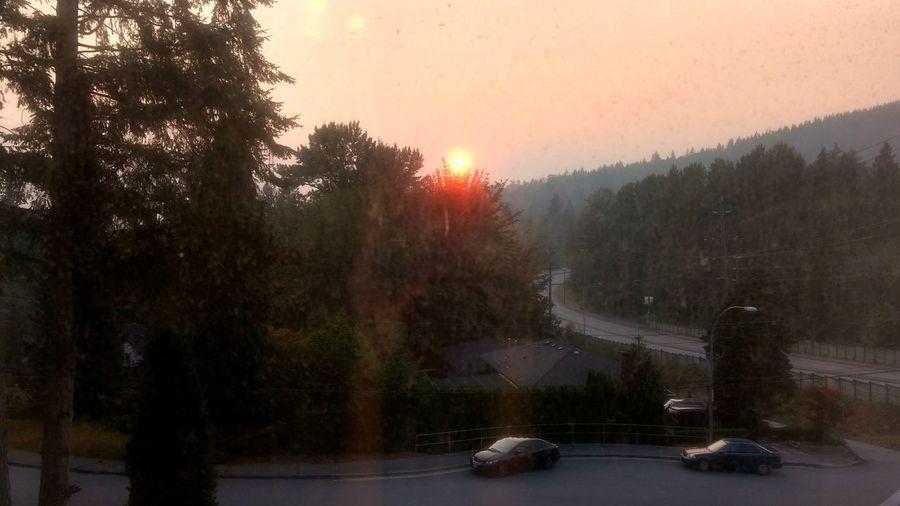 forest fire sun