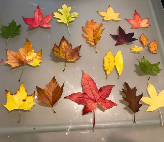 Autumn🍁🍁🍁 Autumn Colours