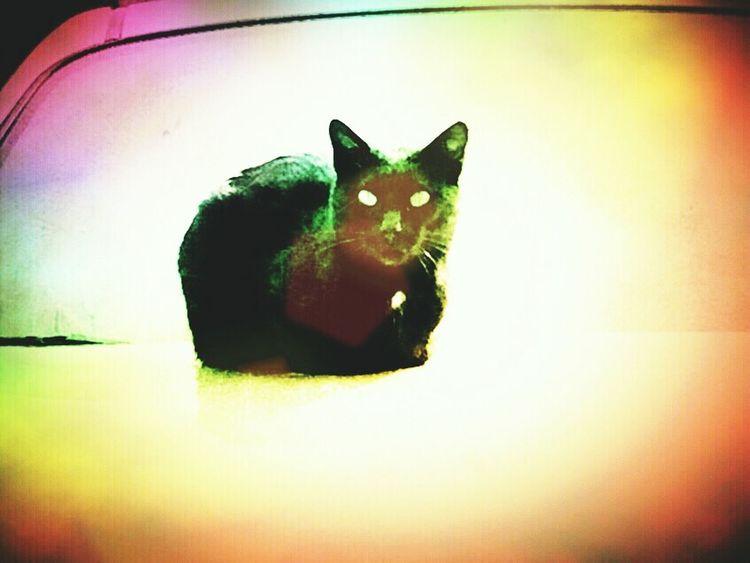 Taking Photos Colorfull Art Black Cat Green Eyes