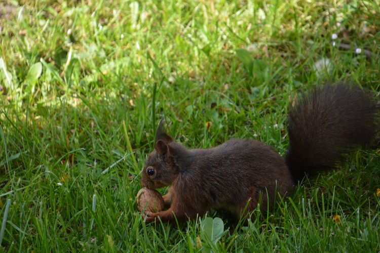 Squirrel Eichhörnchen Animals In The Wild Animal Themes Animal Animal Wildlife Mammal Grass Plant Vertebrate Green Color One Animal Land No People Nature Field Day Young Animal Side View Outdoors Animal Family