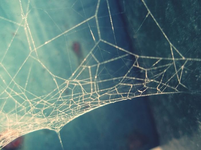 spiderweb. Nature Pantone Colors By GIZMON Your Art Is Portable With Caseable Portugal