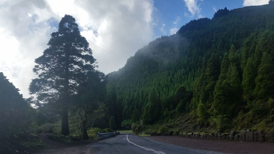 Azores Green Color Beauty In Nature Cloud - Sky Day Forest Growth Landscape Mountain Nature No People Outdoors Road Scenics Sky The Way Forward Tranquil Scene Tranquility Transportation Tree Winding Road