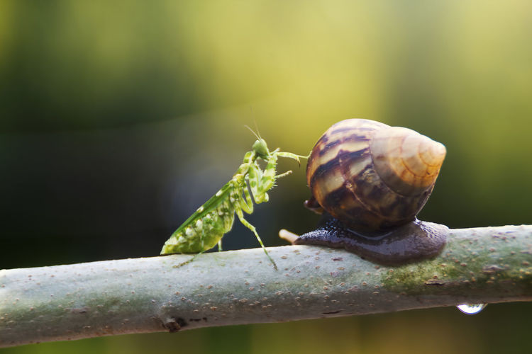mantis and snail Animal Wildlife Animal Animal Themes Invertebrate One Animal Animals In The Wild Close-up Mollusk Insect Nature Shell No People Animal Shell Day Focus On Foreground Plant Snail Gastropod Outdoors Zoology Crawling