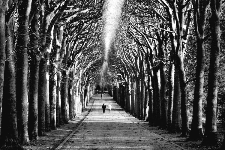 Premium Premium Collection Walking Together Blackandwhite Photography The Way Forward People Tree Day One Person Men Adult Outdoors Nature Tranquility Beauty In Nature Walkway Growth Tree Trunk Real People