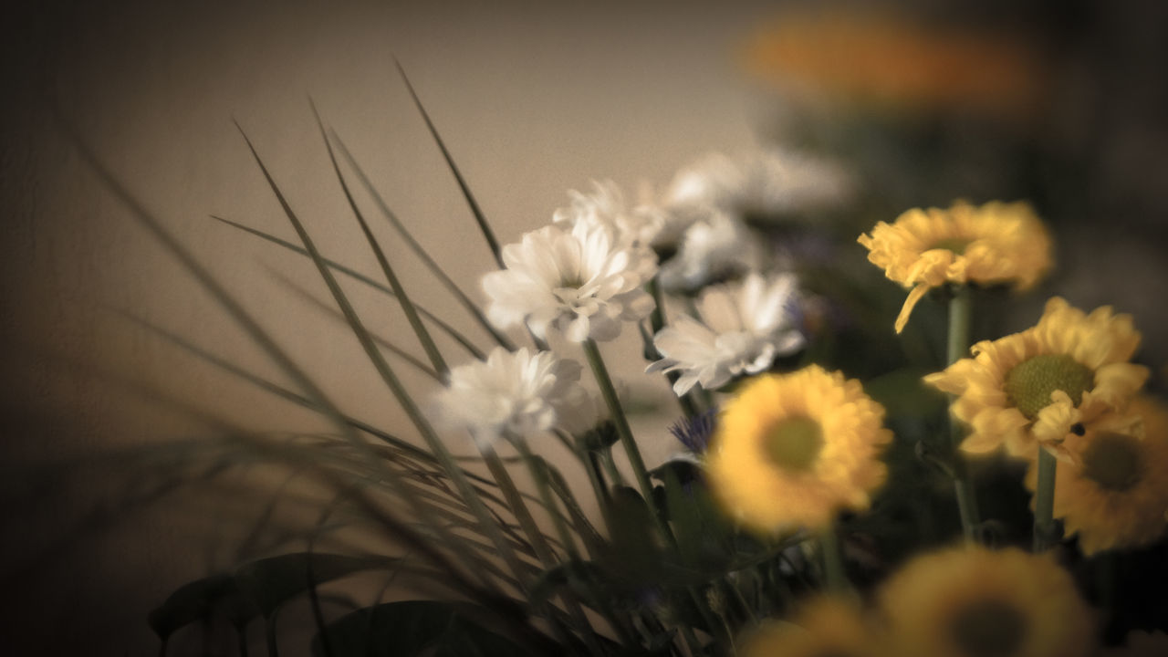 flower, fragility, nature, beauty in nature, selective focus, growth, freshness, petal, flower head, plant, botany, no people, close-up, yellow, blooming, outdoors, day