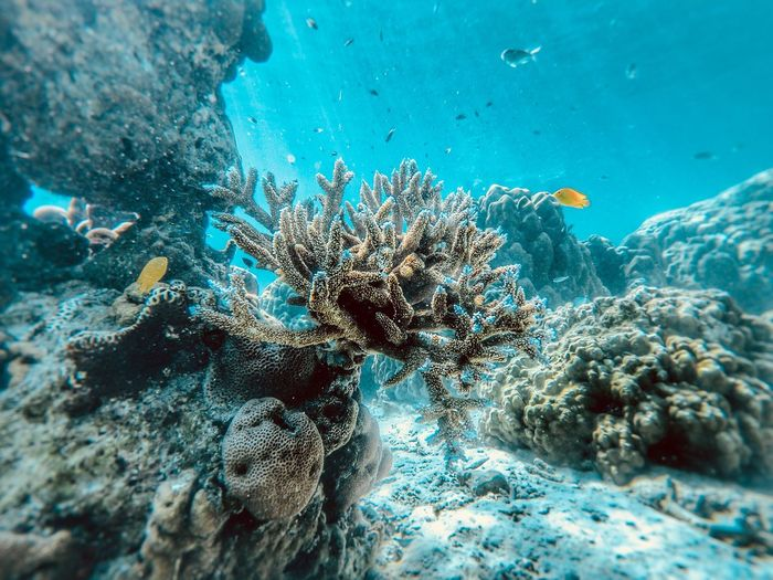 Beautiful Corals at Surin Island Vacations Lifestyles Gopro Amazing Thailand_allshots Thailand Travel Sea Beach Nature Wildlife Water Day Beauty In Nature Outdoors Close-up No People Animal Wildlife