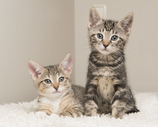 Portrait of cats sitting