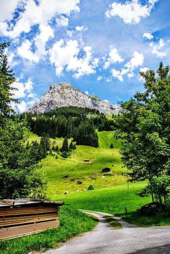 Nature Outdoors Beauty In Nature Tree Sky Beauty In Nature Suisse  Hiking Feelingfree Randonnée Wonderful View Beautiful Nature Sunny Day