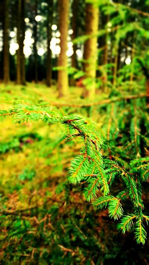 Bestwig Wald, nrw Forest Nature Growth Fern Tranquility Green Color Plant Beauty In Nature No People Leaf Tree Outdoors Tranquil Scene Day Close-up