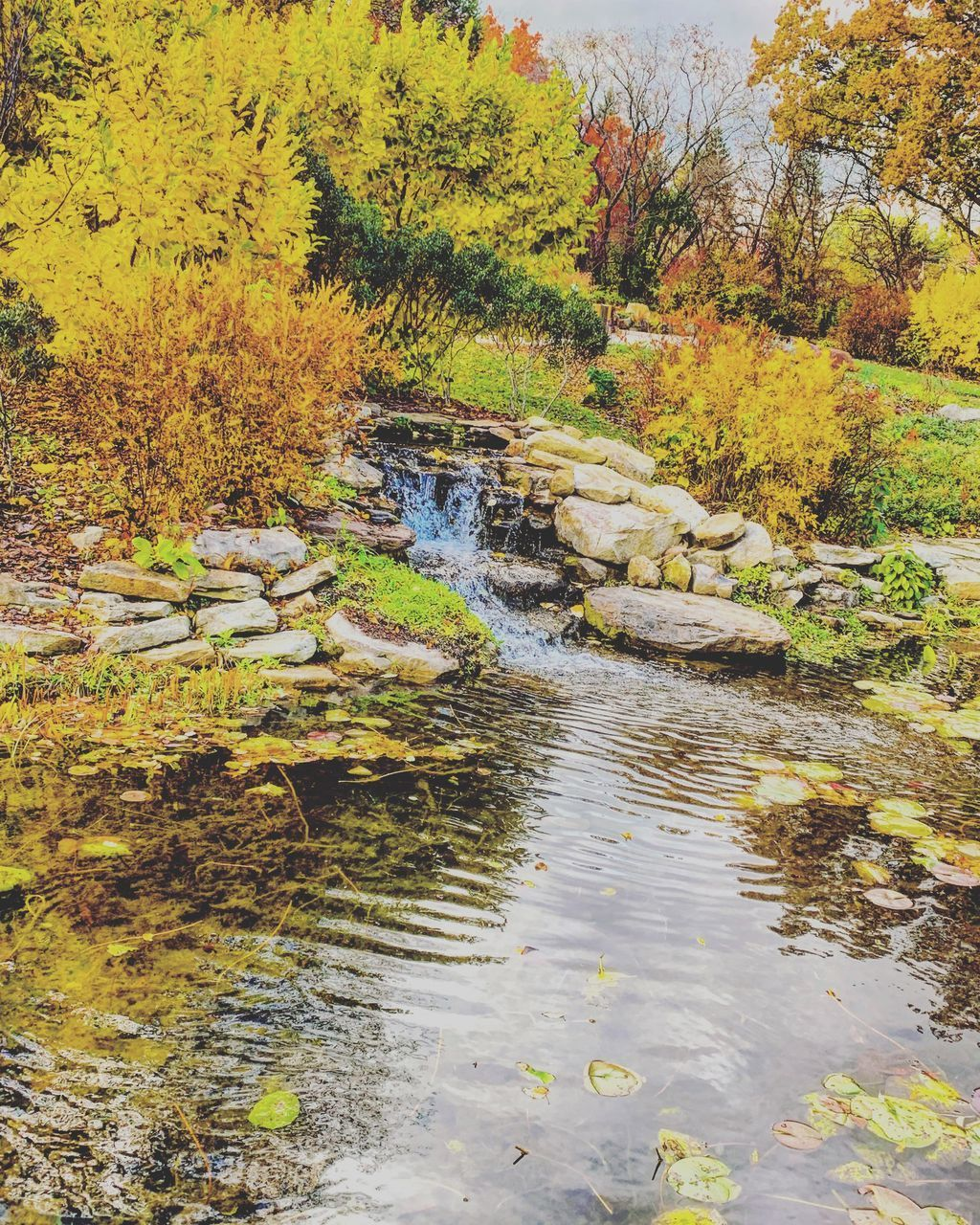 water, tree, plant, forest, autumn, nature, beauty in nature, scenics - nature, tranquility, change, no people, day, flowing water, downloading, land, tranquil scene, growth, motion, lake, outdoors, flowing, stream - flowing water