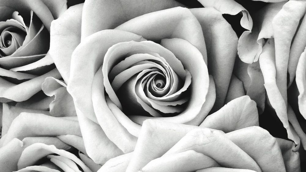 Flower Beauty In Nature Petal Nature Rose - Flower Fragility No People Close-up Japan Iphonegallery https://youtu.be/7KuC_H-BixM