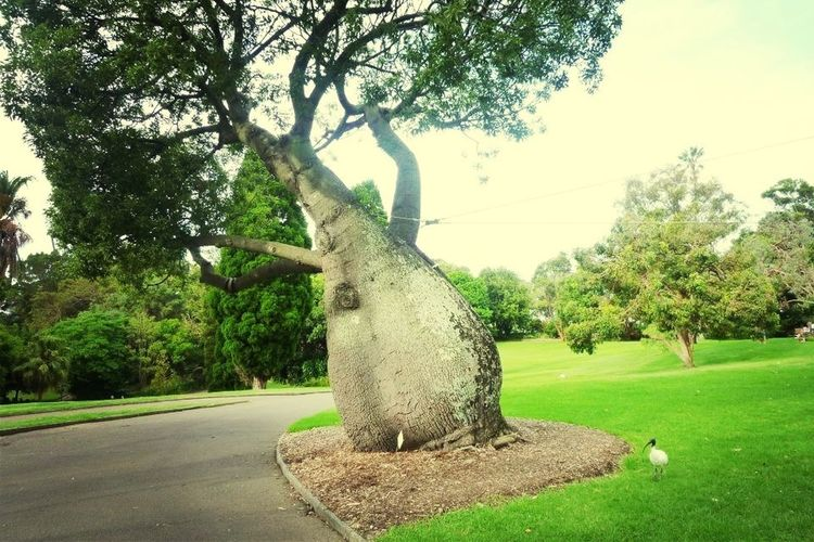 Hanging Out Sydney Tree Park