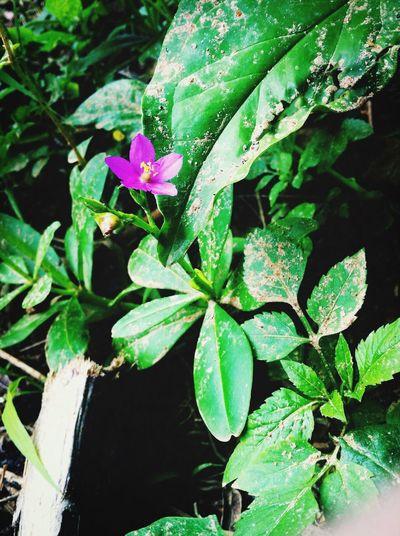 Flower Nature Flor Natureza Pink FlowerPink Green