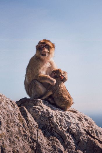 Monkey Sitting Animals In The Wild Rock - Object Animal Themes Mammal No People Day Nature Animal Wildlife One Animal Close-up Outdoors Baboon Sky Japanese Macaque