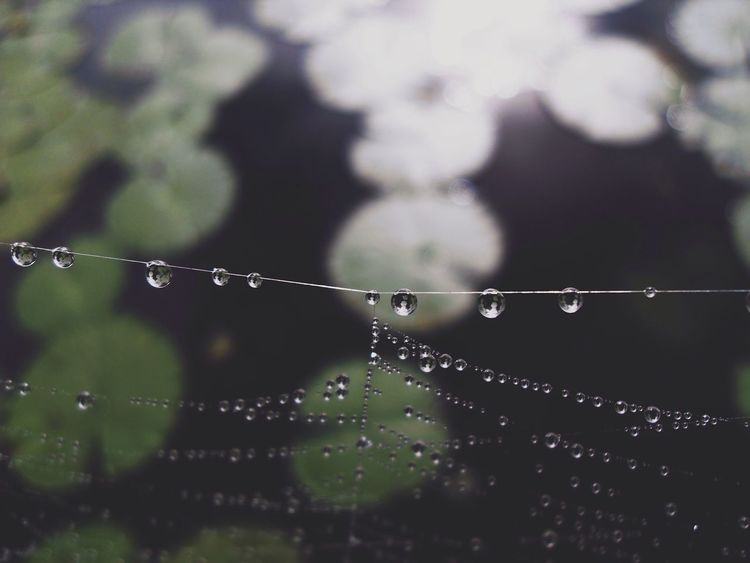 Morning mist. Beautiful Light And Shadow VSCO Nature Macro Beauty