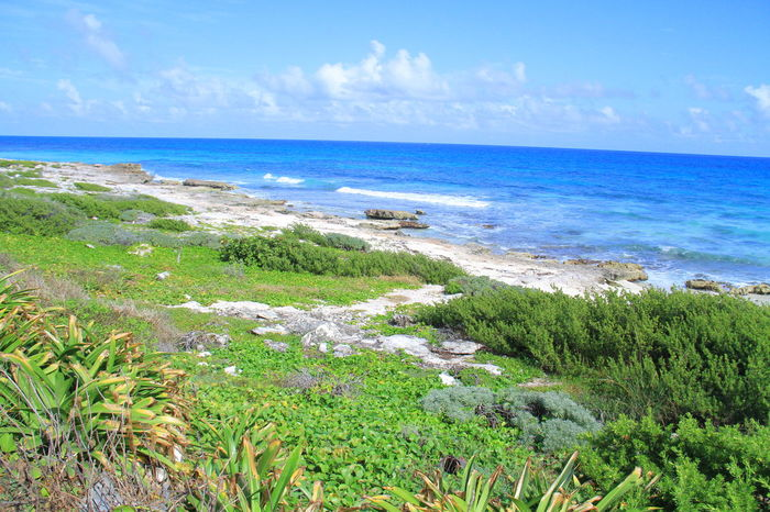 Beach Beauty In Nature Caribbean Caribbean Life Caribbean Sea Caribe Day Grass Horizon Over Water Isla Mujeres Isla Mujeres :) Isla Mujeres Cancun Isla Mujeres Mexico Mar Caribe Mexico Mexico De Mis Amores Nature No People Outdoors Plant Scenics Sea Sky Water Wave