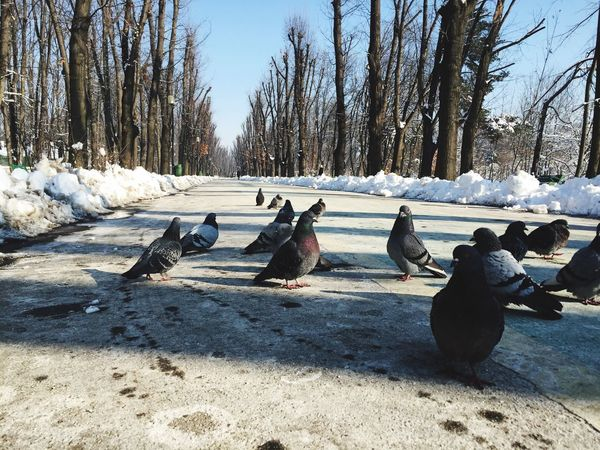 Check This Out Hanging Out Pidgeons Walking Around Walk This Way Park Winter Snow