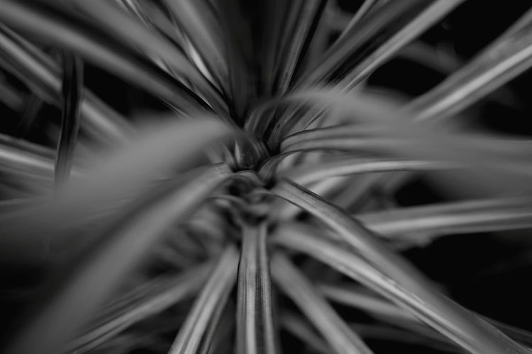 Plant Beauty In Nature Nature Stems Are Pretty Too Close-up Black And White Friday