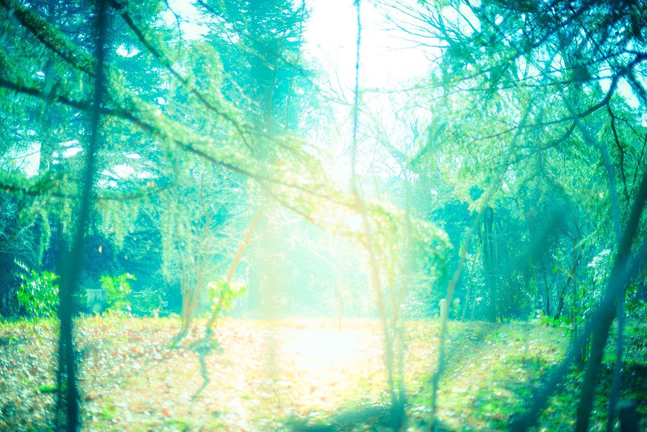tree, forest, nature, window, beauty in nature, day, branch, sunlight, tree trunk, growth, no people, outdoors, freshness, close-up