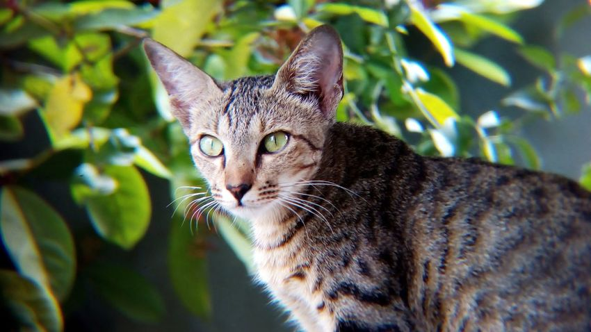 EyeEm Selects Domestic Cat Pets One Animal Domestic Animals Feline Animal Themes Mammal Portrait Animal Leaf Looking At Camera Plant Sitting Day Living Organism No People Outdoors Nature Close-up Cat Shot With Mobile Clip Lens Sitting The Week On EyeEm Pet Portraits