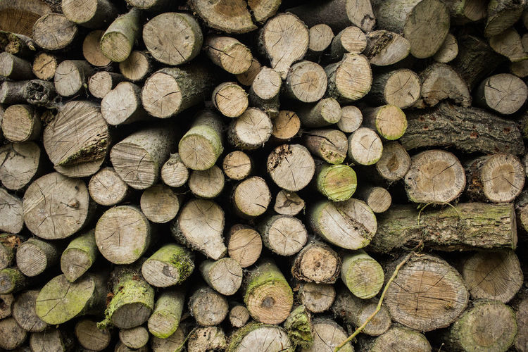 Backgrounds Chopped Deforestation Firewood Forest Full Frame Log Lumber Industry Nature Pattern Timber Tree Wood Wood - Material Woodpile