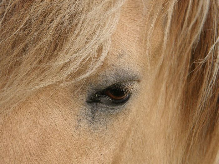 Animal Body Part Animal Eye Animal Hair Animal Themes Close-up Day Domestic Animals Horse Horse Eye Horse Eye Lashes Loyal Mammal Nature No People One Animal Outdoors Sand Color