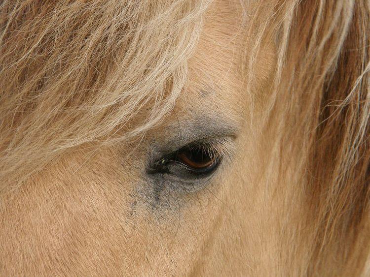Animal Body Part Animal Eye Animal Hair Animal Themes Close-up Day Domestic Animals Horse Horse Eye Horse Eye Lashes Loyal Mammal Nature No People One Animal Outdoors Sand Color
