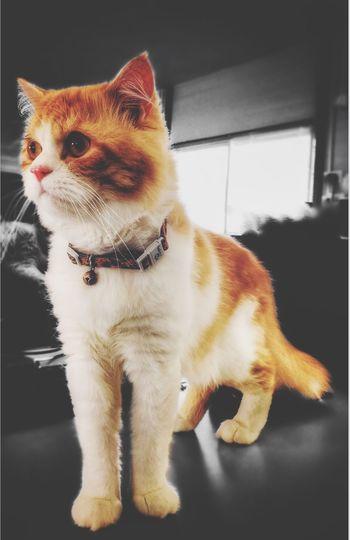 #mybaby❤ Pets Domestic Animals One Animal Mammal Domestic Cat Animal Themes Feline EyeEmNewHere EyeEmNewHere