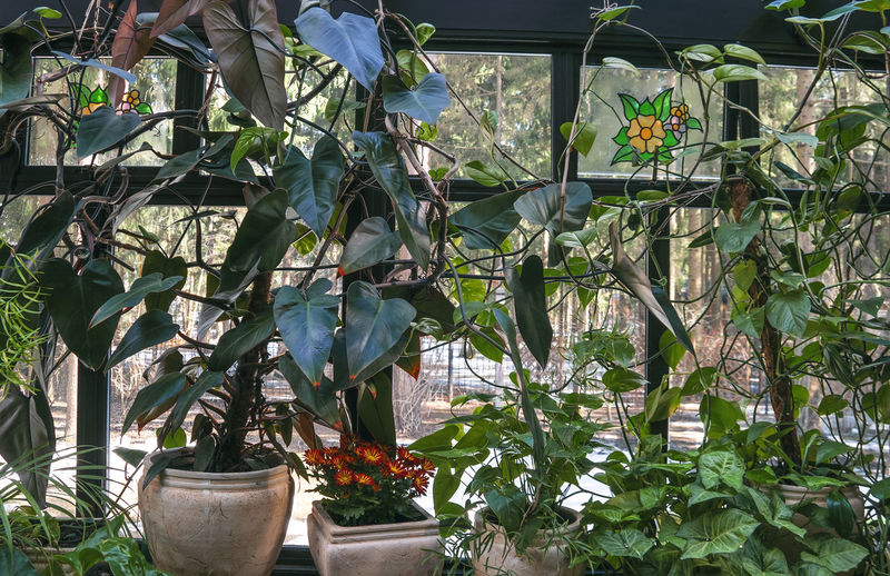Potted plants hanging in greenhouse