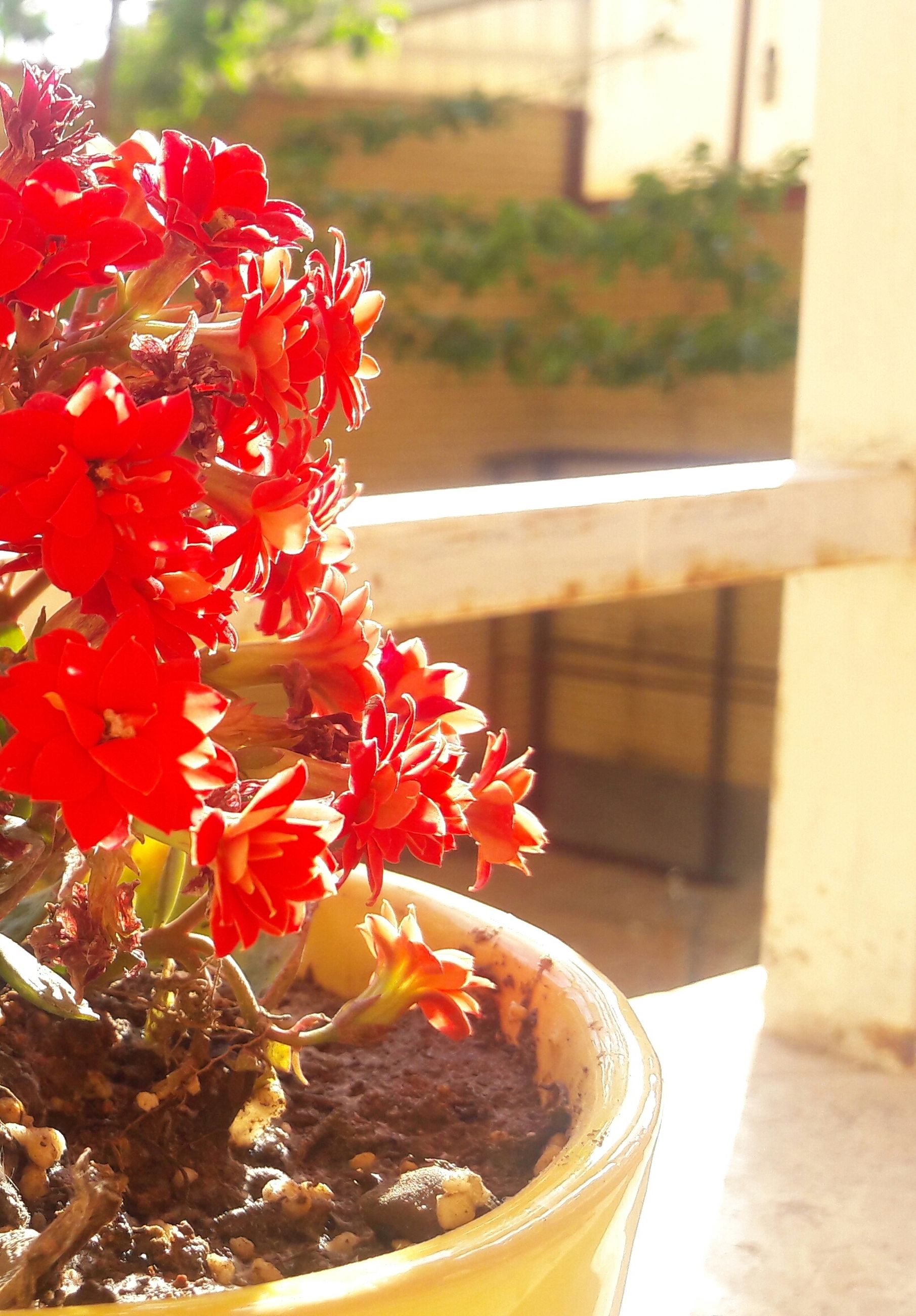 freshness, focus on foreground, red, close-up, flower, food and drink, table, selective focus, indoors, day, no people, food, nature, fragility, ready-to-eat, still life, petal, sweet food, water