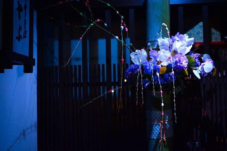 美観地区 Night Flower Beautiful Travel Photography Sightseeing Enjoying The Sights Blue Light Hello World