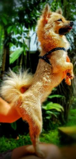 Sickphotography Mymagicfingers Myphoto MyLifeMyRules Dogslife Tini Superdog INDONESIA