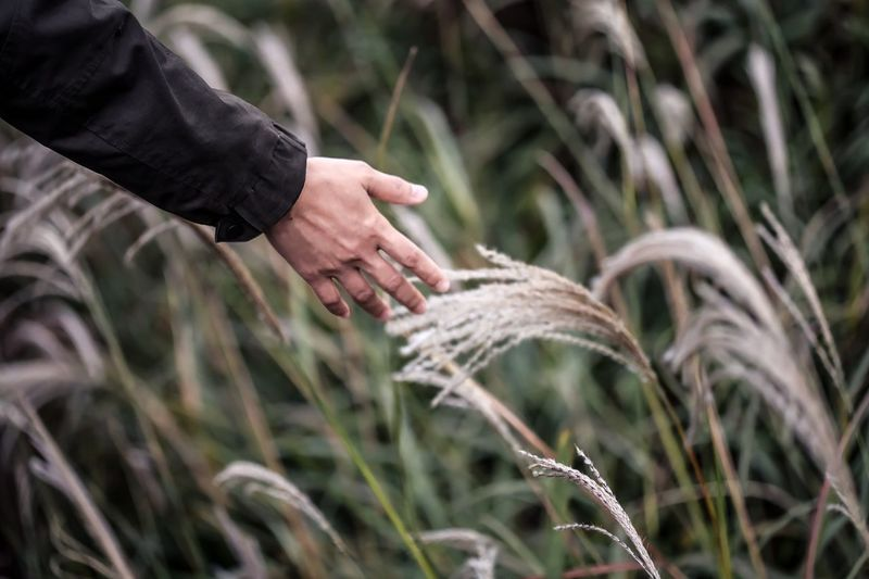 Cropped hand of man touching plant
