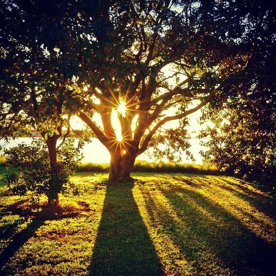 Sun tree at Stockton Newcastle Newy Tree Sunshine Igersnewy Newcastlelifestyle Mynewcastle Igersnewy Newyisok Newcastlensw