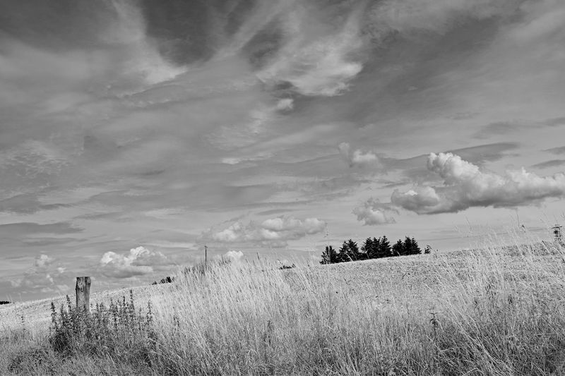 Cloud - Sky Sky Plant Beauty In Nature Field Land Scenics - Nature Tranquility Tranquil Scene Landscape No People Environment Nature Grass Growth Day Non-urban Scene Tree Outdoors Rural Scene Black And White Felder Wolken