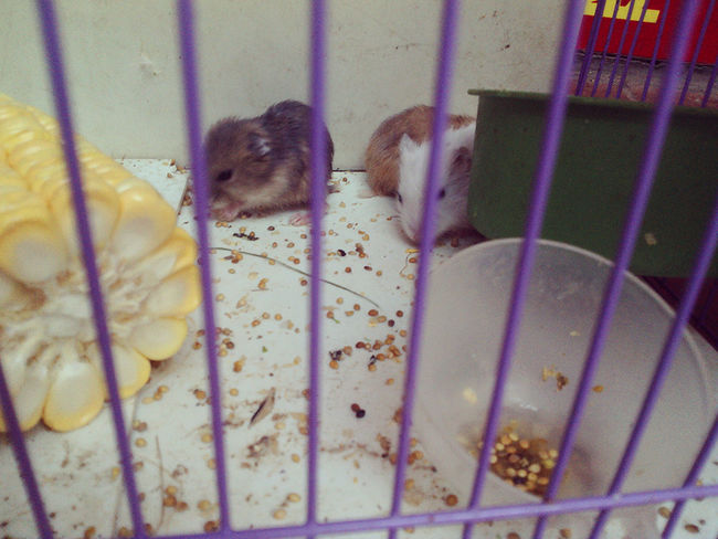 My Hamster Hamsters Cute Pets Pets My Baby <3