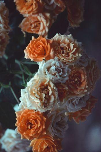 #roses #orange