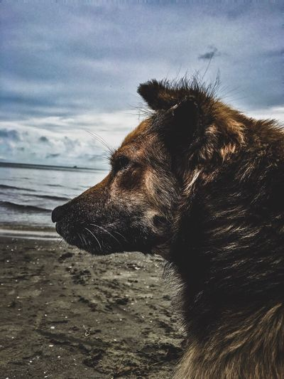 Fue Un Gran Amigo... Perro Photooftheday Photography Dog One Animal Pets Domestic Animals Animal Themes Mammal Beach Nature