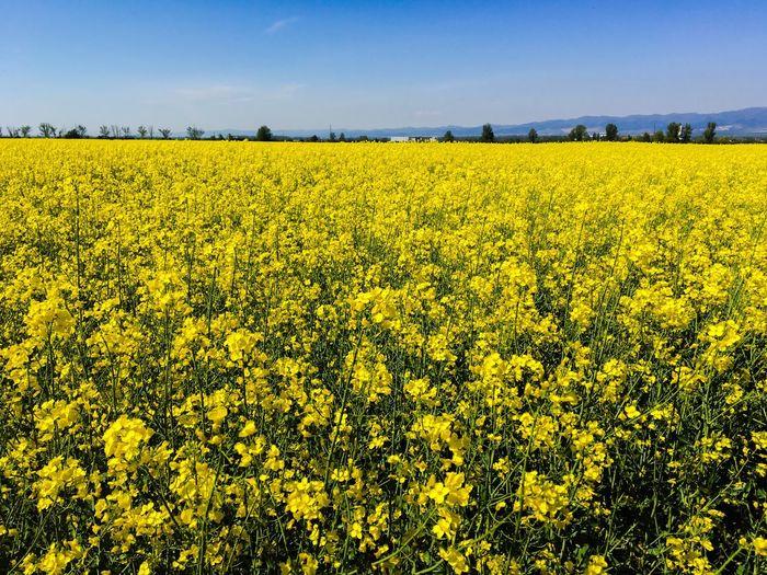 Yellow hunny...