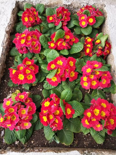 Flower Freshness High Angle View Growth Petal Day Flower Head