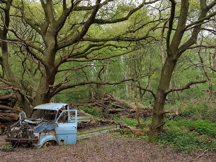 Rusty Tree