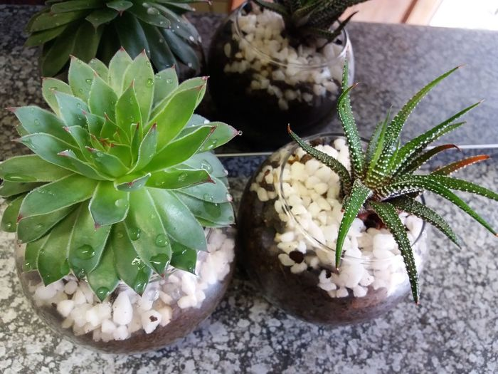 Indoor Photography House Plant Green Nature Minature Garden Succulent Plants Daytime As I Sees It No Person My Pointof View