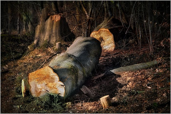 The End Het Leen Light Sawn Trees Wood Close-up Day Eeklo Light And Shadow Nature No People Outdoors Tree Trunk Wooden