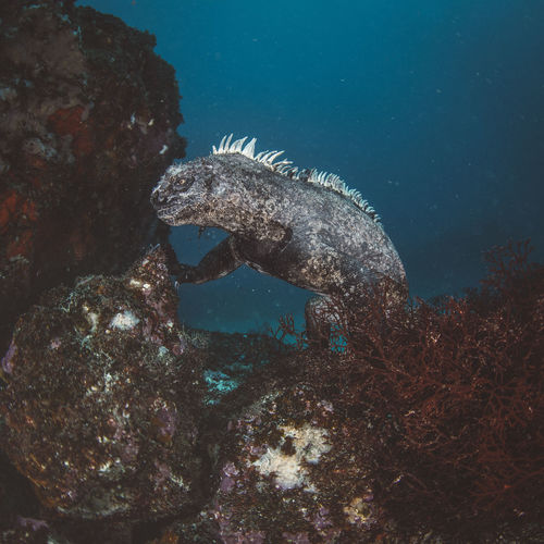 Animal Wildlife Animals In The Wild Underwater Water Animal Sea Animal Themes One Animal Sea Life UnderSea Marine No People Swimming Nature Vertebrate Rock Reptile Solid Day Ecosystem